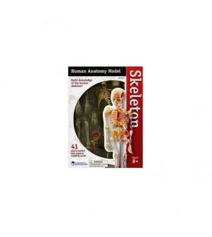 Sablon corp uman - Schelet - Corpul uman
