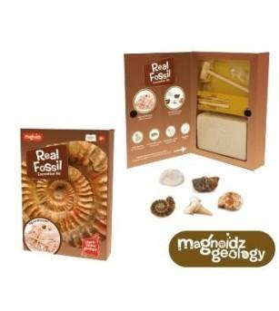 Kit paleontologie Keycraft - Descopera fosile - Mediu înconjurător