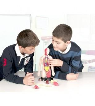 Kit educational mulaj - Corpul uman si sistemul digestiv - Corpul uman