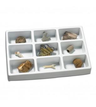 Kit paleontologie - Fosile - Mediu înconjurător